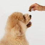 CBD-Pet-Treats-Heart-and-Immunity-LifeStyle-1
